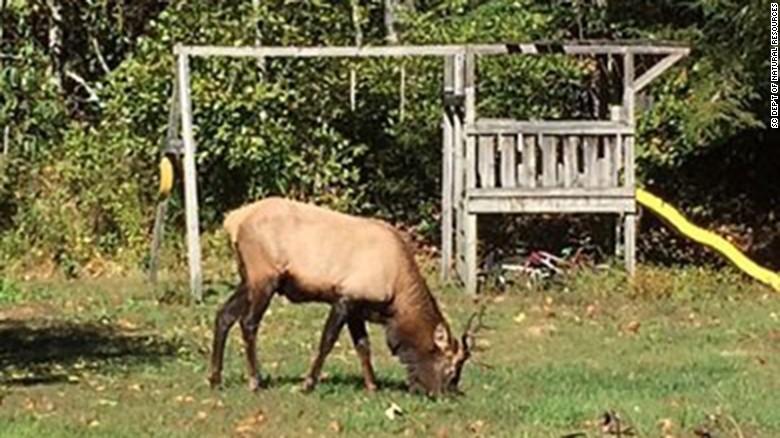 161026204239-elk-south-carolina-exlarge-169_246294