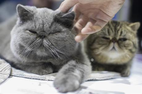 cats_293471