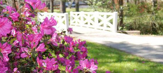 Flowertown_320964