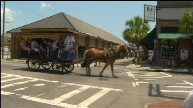 WCBD-carriage horses_319346