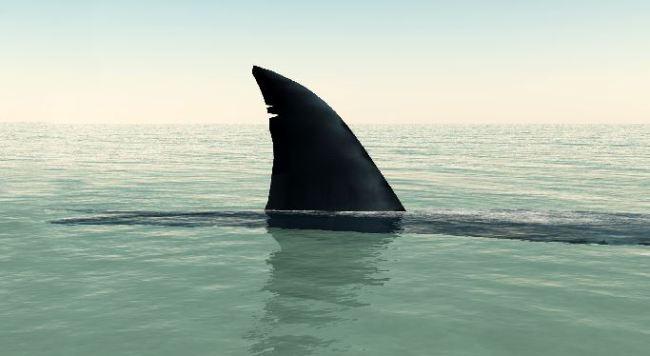 shark_386773
