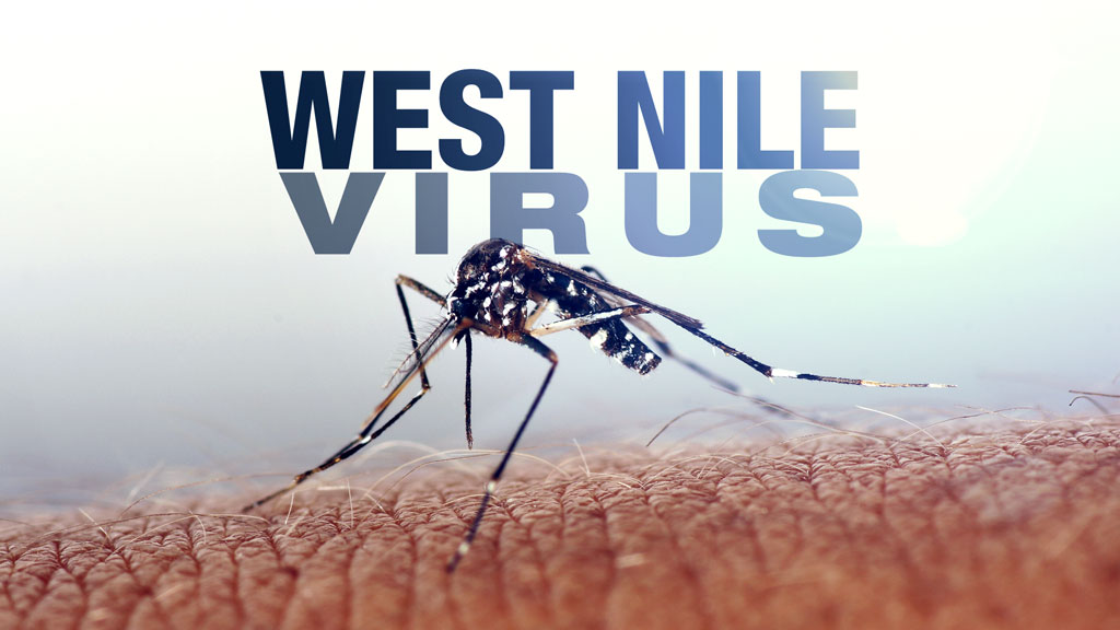 west-nile-virus-mosquito-generic-file-mgfx_380345