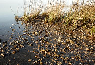 DHEC closes some Charleston County shellfish beds_74338