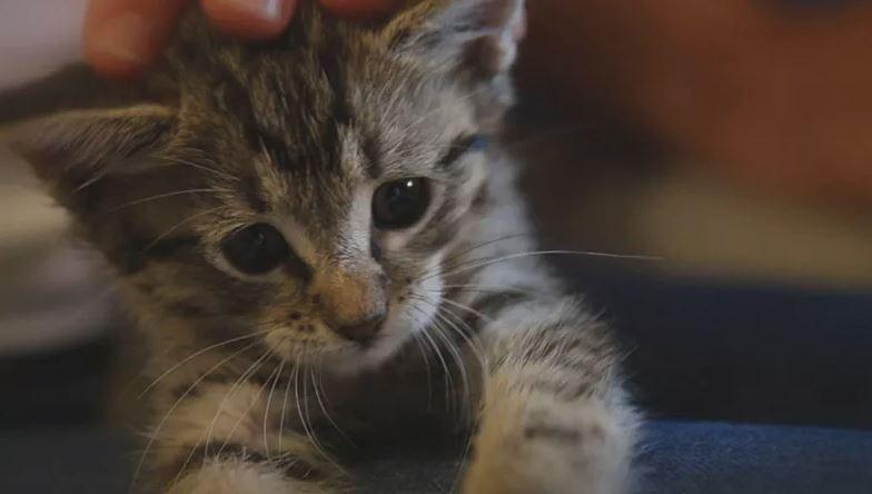 Kitten_1525890106301.JPG
