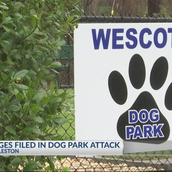 Dog Park Attack
