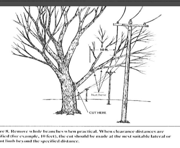 DOMINION TREE TRIMMING_1554728914792.JPG.jpg