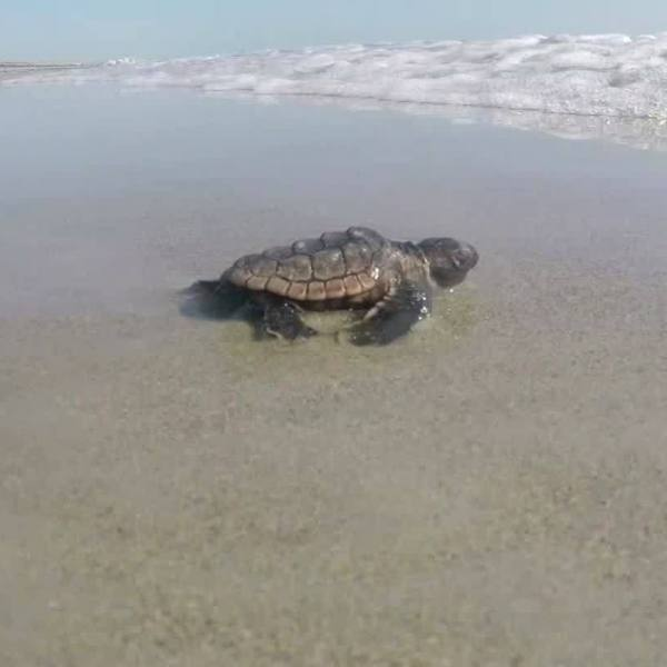 Moment of Science- Turtle Safety Tips