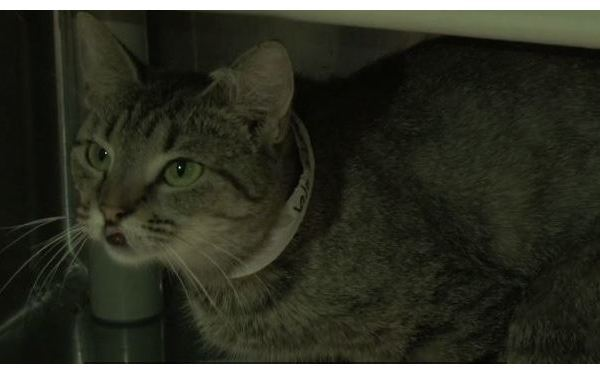 Charleston Animal Society cares for rescued cats