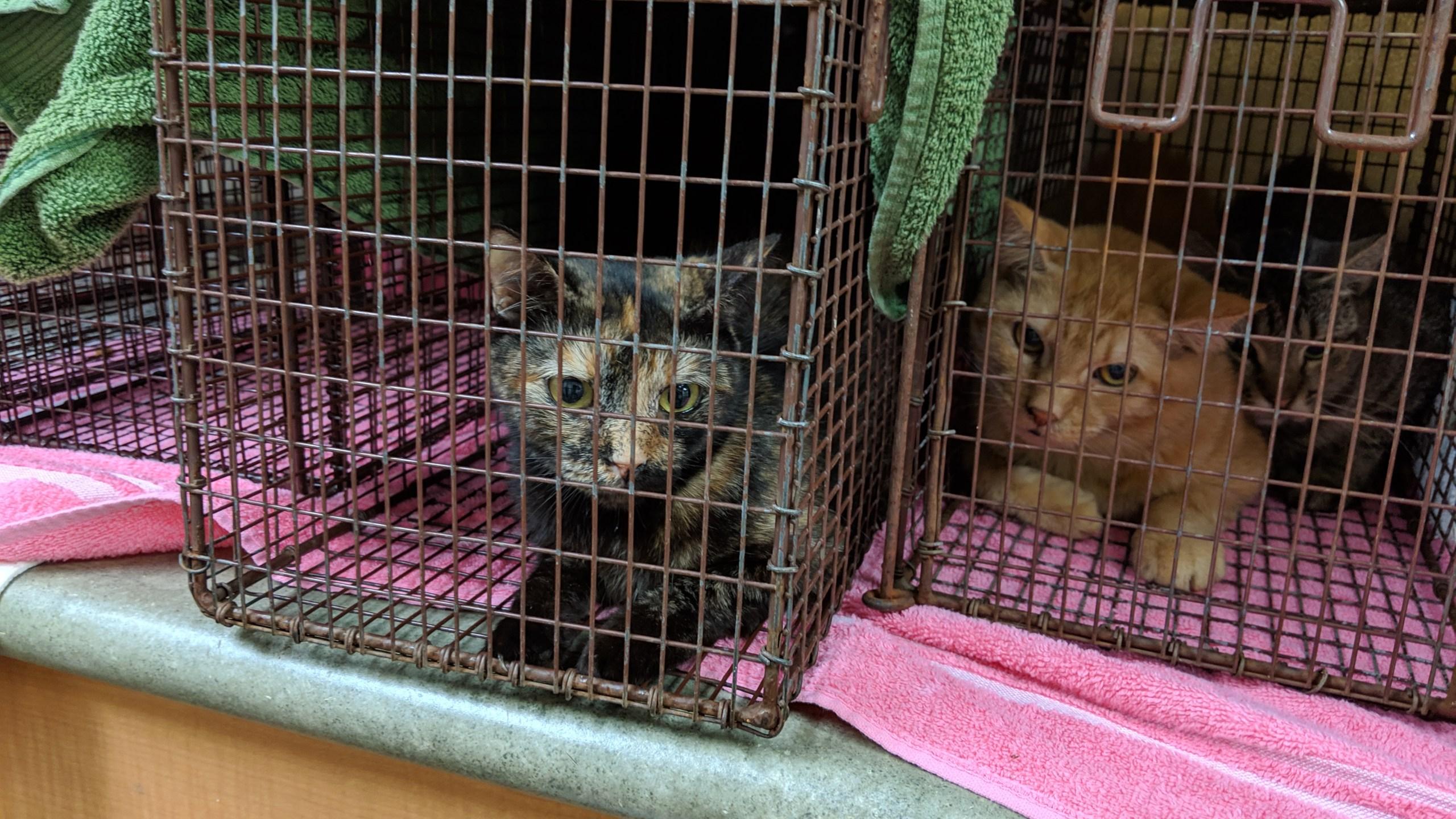 cat hoarding case 1_1556841245703.jpg.jpg