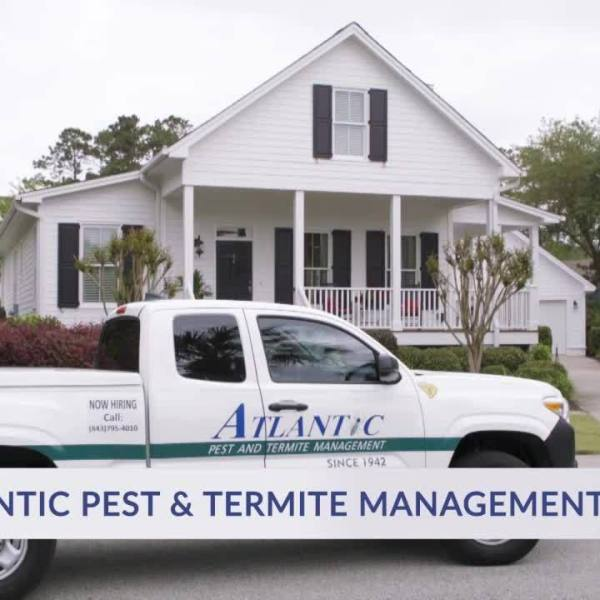 Atlantic Pests & Termite Management: Termite Issues