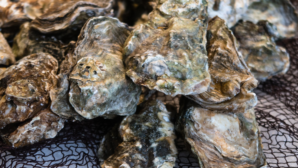 Oysters_1560454632677.png